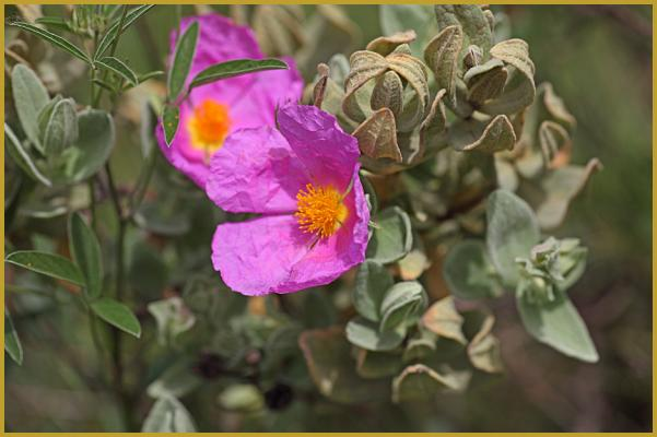 photos de quelques photos de la faune et de la flore des garrigues