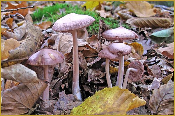 Photos de Photos des champignons d'Europe, Nature